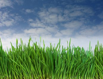 Get Healthy Green Grass with the Right Fertilization Plan!